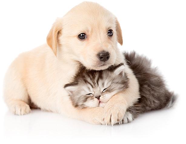 veterinario las rozas