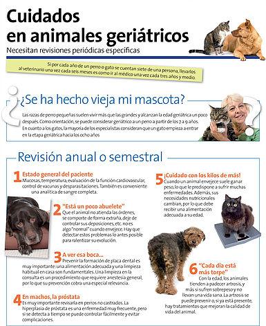 Cómo Cuidar Animales Geríatricos Clínica Veterinaria