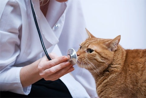desparasitacion veterinario las rozas