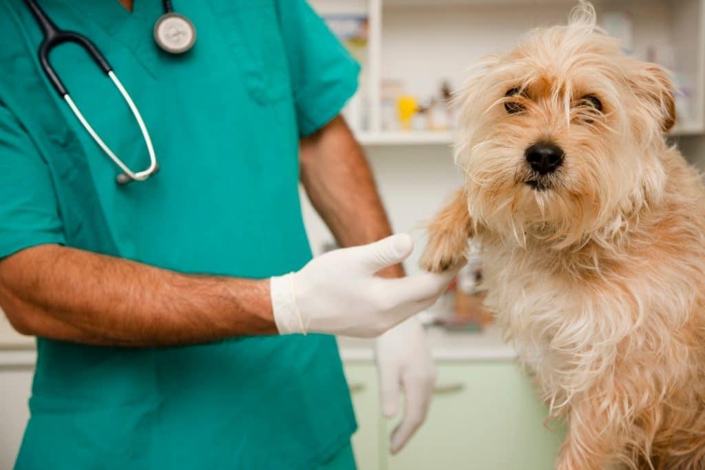veterinario de urgencia las rozas