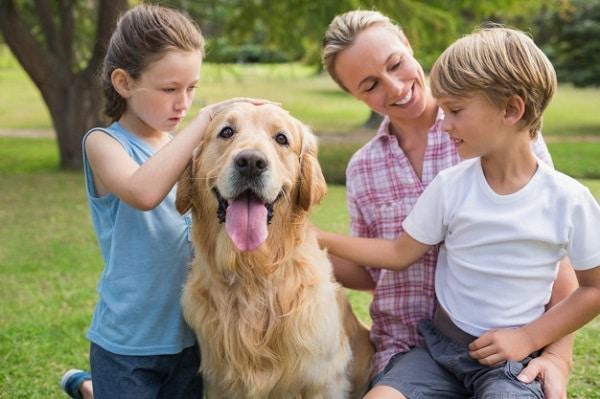 asistencia veterinaria a domicilio las rozas