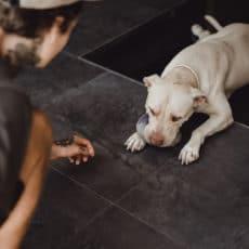 Al veterinario sin miedo