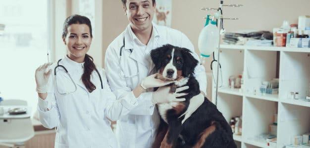 ¿Qué vacunas tengo que ponerle a mi perro?