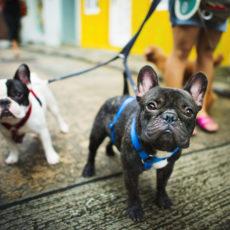 ¿Qué es mejor collar o arnés para mi perro?