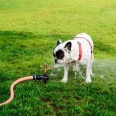 7 consejos para proteger a tu perro del calor