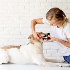 La importancia de una buena limpieza bucal canina