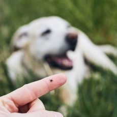 Cómo proteger a tu mascota: La importancia de la desparasitación