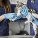 Tratamientos de cirugía para mascotas