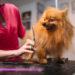 Ventajas por las que deberías llevar a tu perro a una peluquería canina