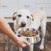 ¿Cómo elegir la comida correcta para mi perro?